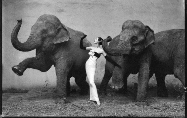 dovina-elephant