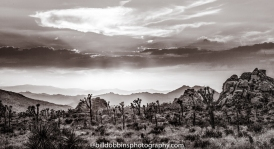 background-joshua-tree-021-edit