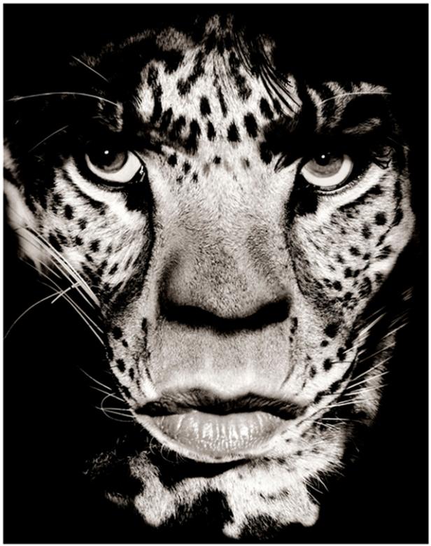 jagger-leopard