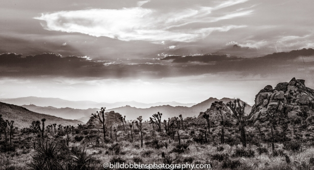 Background-Joshua Tree-021-Edit