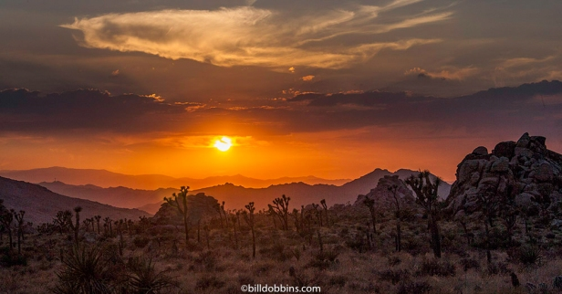 Sunset-Joshua Tree-021