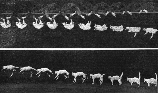 1200px-Falling_cat_1894