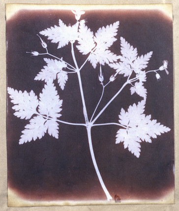 salted paper print from calotype