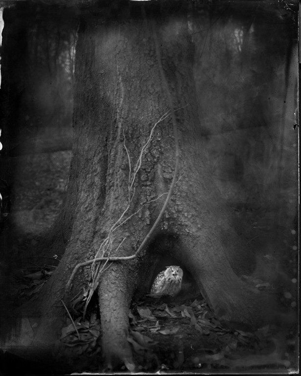 Tree_Roots_2014-1