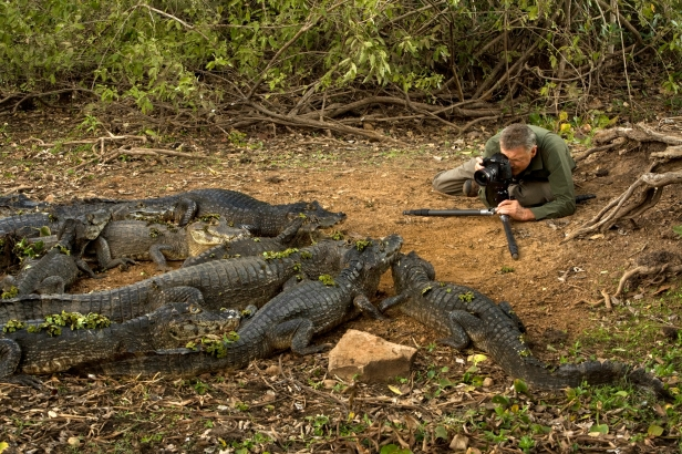 Art Wolfe and Caimans, Pantanal, Brazil