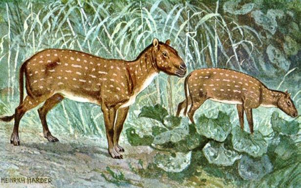 horse ancestor